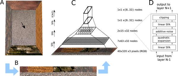 Quelle: Franzius (HU-Berlin) At a given position and orientation of the virtual rat (arrow) in the naturally textured virtual-reality environment (A), input views are generated (B), and processed in a hierarchical network (C). The lower three layers perform the same sequence (D) of linear SFA (for dimensionality reduction), expansion, additive noise, linear SFA (for feature extraction), and clipping; the last layer performs sparse coding (either ICA or CL).