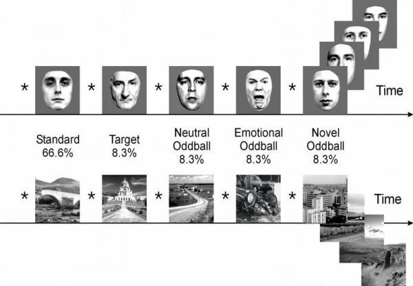 Bildmaterial: Dargestellt ist ein Reihe an Bildern, die während des Experiments verwendet wurde. In der Analyse der Aktivierungen spielte es keine Rolle, ob Gesichter oder Szenen präsentiert wurden.