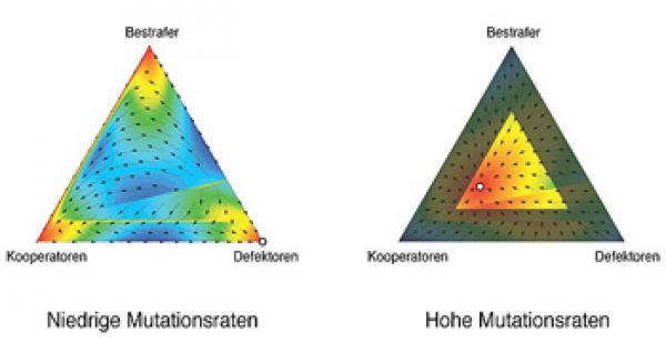 Quelle: mpg/Arne Traulsen Bei niedrigen Mutationsraten gewinnen die Egoisten (Defektoren), bei hohen Mutationsraten dagegen die Kooperatoren. Bild: Max-Planck-Institut für Evolutionsbiologie/Arne Traulsen